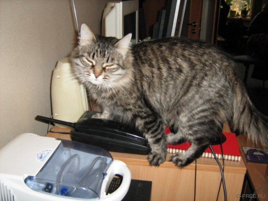 У кошки рак сиськи. Вивисекция