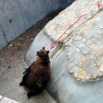 Чем медвед мажет жопу?