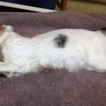 Кошка в микроволновке