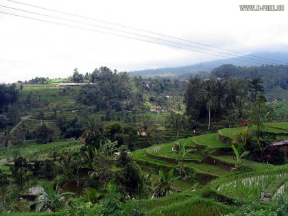 Индонезия. Типичный пейзаж Бали