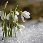 Люблю весну
