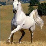 Как товарищ Сталин упал с коня