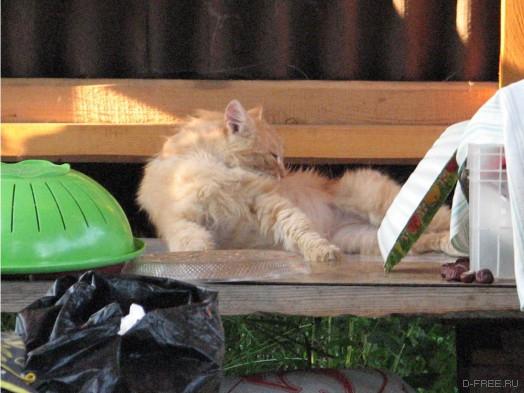 Приблудный кот