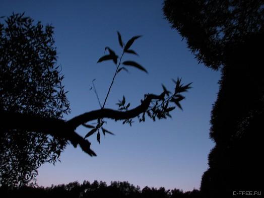 Ветви ивы, фазы луны